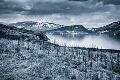 Winter Blues (Sterling Photography) Tags: winter blackandwhite lake film water vintage okanagan rangefinder toned lakescape