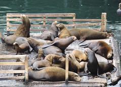 Fisherman's Wharf (Vi) Tags: california usa monterey unitedstates eua fishermanswharf montereycounty condadodemonterey pacifica1 22062014 junho2014 camarillohwy