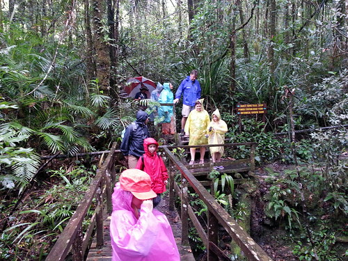 On the Mt Kinabalu rainforest walk