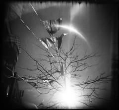 sunset park grand opening (htcoogan) Tags: nyc blackandwhite bw sun tree 120 film brooklyn holga kodak toycamera flags lensflare sunsetpark brooklynian