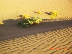 Desert (haidarism (Ahmed Alhaidari)) Tags: beauty desert sands جمال روعة صحراء رمال جفاف جدب
