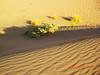 Desert (haidarism (Ahmed Alhaidari) Baaaack) Tags: beauty desert sands جمال روعة صحراء رمال جفاف جدب