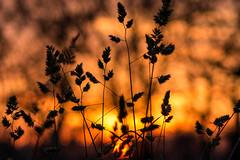 Szeged Sunset (Emese Ruzsa) Tags: