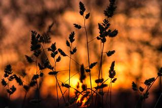 Szeged Sunset