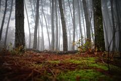 (ilariasantinelli) Tags: fog natura nebbia bosco