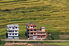 Village Houses By Terraced Fields, Nagarkot-ChanguNarayan trek, Nepal (Feng Wei Photography) Tags: travel nepal house mountain color green tourism nature beautiful beauty horizontal rural trek relax landscape scenery colorful asia village terrace outdoor relaxing scenic peaceful tranquility lush tranquil scenics nagarkot terracedfield bagmati
