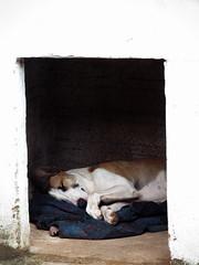 Sun (rotinaminha) Tags: sleeping dog perro cachorro dormindo