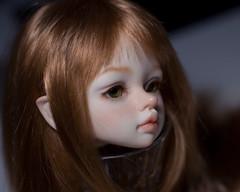 _DSC4231 (olesyagavr) Tags: dim odile dimdoll