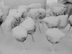 TROODOS _18 (liontas-Andreas Droussiotis) Tags: winter cyprus olympuspen limassol troodos platres droussiotis liontas