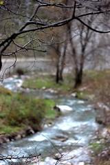 (natalybruce) Tags: mountain tree nature canon river photography eos bokeh outdoor bulgaria vratsa 600d