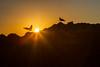 Seagulls at Sunset (Mark Harshbarger Photography) Tags: california sunset beach leocarrillostatebeach