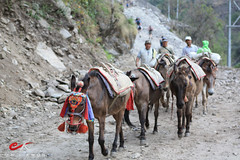 Donkey Train