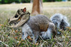 Dinossauro (wilpersou) Tags: pokemon worth1000 esquilo montagem cubone