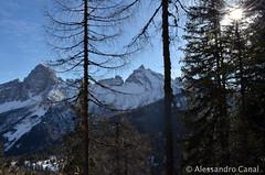 Montagne tra gli alberi