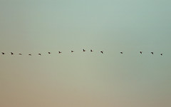 Call (aquigabo!) Tags: blue sunset sky nature birds canon landscape eos rebel montreal go flight wave minimal line 700d t5i