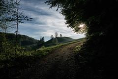 Hike it. Like it. (Toni_V) Tags: sun sunrise landscape schweiz switzerland spring europe suisse hiking 28mm rangefinder trail mp svizzera sonnenaufgang aargau frhling wanderung wanderweg randonne 2016 svizra escursione leicam 160506 elmaritm niksoftware messsucher jurahhenweg typ240 analogefexpro2 toniv m2404585 staffelegghauensteinbalsthal etappen34