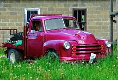 Dents and Dandelions (e r j k . a m e r j k a) Tags: ohio 1948 truck junk fifties ride chevy dandelions us250 erjkprunczyk oh9 oh151
