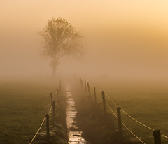 Emergence (zebedee1971) Tags: sun tree water grass fog sunrise fence wow landscape stream farm foggy calm farmland brilliant channel natureandnothingelse