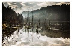 Alatsee, Bavaria (08dreizehn) Tags: lake reflection fog germany de bayern deutschland bavaria see europa europe nebel lac allemagne spiegelung brouillard morgens fssen allgu rflexion alatsee olympusm17mmf18 olympuspenepl7 08dreizehn nullachtdreizehn thomashassel