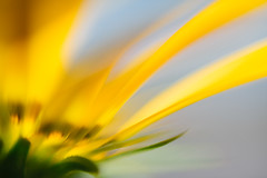 Ashikaga - Ashikaga Flower Park () Tags: sony cosmos ashikaga      tochigiprefecture ashikagaflowerpark a7r