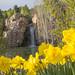 Daffodils+and+Waterfall