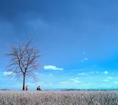 ...LeafStrike... (7H3M4R713N) Tags: sky lake nature alpes landscape ir switzerland suisse outdoor swiss bluesky infrared infra neuchtel falsecolor blueandyellow xe1 mirrorless convertedcamera pixelpeeper 590nm fujinonxf18135mmf3556rlmoiswr