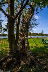 Combat de longue haleine (alex.bernard) Tags: park canada tree nature canon day outdoor jour qubec 5d tamron extrieur arbre parc halteroutire otterburnpark tamron2470 canon5diii
