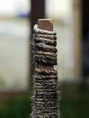 Scratching Post (Boneil Photography) Tags: dof bokeh panasonic tamron scratchingpost wideopen m43 90mmf25macro 52bb microfourthirds boneilphotography dmcg10 brendanoneil