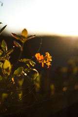 Basking In The Sun (Elliot Tratt) Tags: sunset summer plants sun sunlight plant nature canon eos soft cornwall glow natural softness 85mm lensflare flare 5d glowing 2016 5dm2 5dmark2