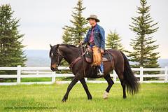 Morgan Under Saddle (b_mccarley) Tags: horses horse animal mare riding western morgan equestrian equine horsemanship gelding horsesatliberty