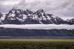 DSCF9007lr (HDRob) Tags: bison buffalo grandtetonnationalpark grandtetons sunrise landscape
