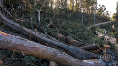Storm Road 3/3 (edgetas.com - tasview.com) Tags: road trees storm sony australia down fallen damage tasmania carnage hobart 2016 rx100 edgetas