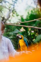 Kakak Tua (bady_qb) Tags: bali bird film nature indonesia fuji dof bokeh explore cockatoo burung kakaktua xt1