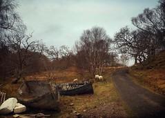 Near Samalaman, Glenuig, Lochber (Grangefirth) Tags: painterly highland lochaber clh classictoy colournegativefilm ipadpro contemporaryartssociety photoforge2 snapseed phototoaster grangefirth classicsnaplens iphone6s
