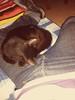 Gato durmiendo... (AVENTURA615) Tags: negro jeans gato levis bulge durmiendo bulges