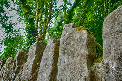 Stand on Guard (gabi-h) Tags: trees ireland leaves moss vines historical strong stonefence gabih fencefriday