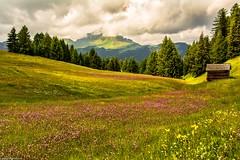 The hills are alive.... (AlbOst) Tags: dolomites alpineflowers alpinehut alps flowers flowermeadows italy italianlandscapes altabadia