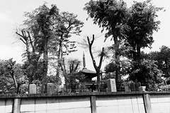 Gotokuji Temple, Tokyo (fabiolug) Tags: trees tree nature temple gotokujitemple gotokuji tokyo japan japanese asia leicammonochrom mmonochrom monochrom leicamonochrom leica leicam rangefinder blackandwhite blackwhite bw monochrome biancoenero 35mmsummicronasph 35mmf2summicronasph summicronm35mmf2asph summicron35mmf2asph 35mm summicron leicasummicron leica35mm