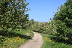 ckuchem-1217 (christine_kuchem) Tags: streuobstwiesenweg streuobstwiese streuobst wiese obstbaum frhling frhjahr blte bltezeit obstbume