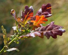 Plants (1selecta) Tags: plant plants green red reddish greenery