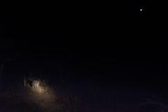 rhino moon (JonathanIchikawa) Tags: rhino safari southafrica mooning puns