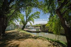 On the Sacramento Delta (Franco Folini) Tags: green shermanisland sacramentoriver sacramentosacramento delta river fiume darsena fluviale