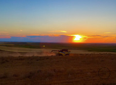 Harvest Sunset (breann.fischer) Tags: harvest sunset landscape nature hills prairie prairielife greatplains northdakota growfood lentils newholland combine colors harvesting nd2016contest