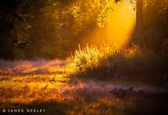 New Light (James Neeley) Tags: london hydepark sunrise light jamesneeley