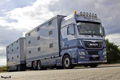 "Man Tgx Euro6 xxl "" MARTIN KORTE "" (D) (magicv8m) Tags: tir trans transport lkw livestock martin korte"