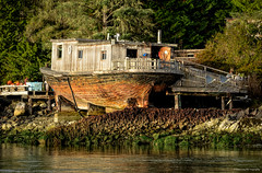 Beached Houseboat on Strawberry Island in Tofino (spetersonphotography) Tags: tofino westcoast westcoastvancouverisland tourists longbeach pacificrim pacificrimnationalparkreserve fishing fishboats inlet water pacificocean ocean docks wharves oldboats storms birdwatching sailboats tofinoair strawberryisland strawberryislandcommunity floathomes floatinghomes tofinoharbour tofinoinlet clayoquotsound floats buoys britishcolumbia canada nature nikond5200 nikon 2016 theinnattoughcity icehouseoysterbar houseboat