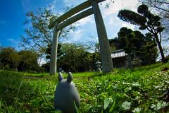 Shiroyama park : Tokina AT-X 107 Fisheye 10-17mm F3.5-4.5 (telenity) Tags: japan landscape tateyama    totoro neighbor ghibli studio    eos60d tokina