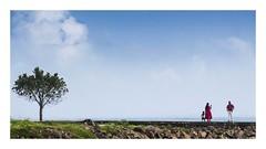Family-Tree (Madhusudanan Parthasarathy) Tags: kochi fortkochi cochin kerala keralam india incredibleindia family kid parents tree green blue 169 frame street streetphotography madhusudananparthasarathy nikon d750 photo camera cellphone mobile moments chennaiweekendclickers cwc cwc547