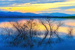 Reflecting at Sunset (slava_kushvalieva) Tags: trees branches sticks colorado lake scenic scenery landscape view rockymountain foothills colorful western sunset sky jamesinsogna