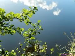 Branche des nuages (FleurdeLotus28) Tags: nature paysage tree france nikon automne autumn rgioncentre ciel sky reflet reflection eau water river tang cloud nuage poetry minimalism minimalisme vert bleu landscape
